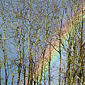 Rainbow Hiding Behind The Trees by Kristen Fox