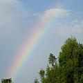 Rainbow by Janet K Wilcox