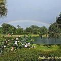 Rainbow by Jessie Lynn