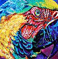 Rainbow Macaw by Maria Arango