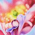 Rainbow by Natasha Denger