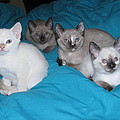 Rainbow Of Kittens by Pamela Benham