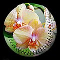 Rainbow Orchids Baseball Square by Andee Design