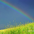 Rainbow Over Pasture Field by Thomas R Fletcher