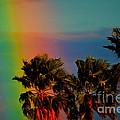 Rainbow Palms In Florida by Susanne Van Hulst