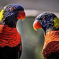 Rainbow Parrot by Alex Grichenko