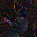 Rainbow Peacock Fractal by TnBackroadsPhotos