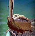 Rainbow Pelican by Karen Wiles