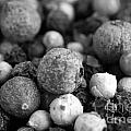 Rainbow Peppercorn Macro Black And White by Iris Richardson