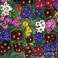 Rainbow Petals by H Koehler