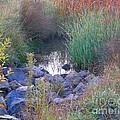 Rainbow Pond by Bev Conover