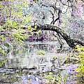 Rainbow Springs by Dawn Duffield