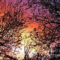 Rainbow Sunset by Kaye Menner