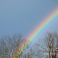 Rainbow Through The Tree Tops by Kristen Fox
