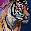 Rainbow Tiger by Alixandra Mullins