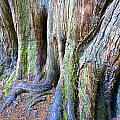Rainbow Tree by Charlie Brock