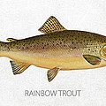 Rainbow Trout by Aged Pixel