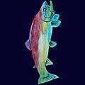 Rainbow Trout by Jenny Armitage