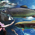 Rainbow Trout by Lisa Redfern