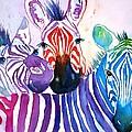 Rainbow Zebra's by Carlin Blahnik CarlinArtWatercolor