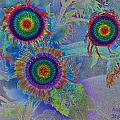 Rainbows In Flowers  by Augusta Stylianou