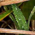 Raindrops In The Grass by S Cass Alston