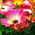 Raindrops On Flower by Corey Wexler