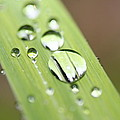 Raindrops On Flower by Nick LaRocque