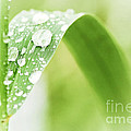 Raindrops On Grass by Elena Elisseeva
