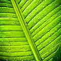 Raindrops On Green Leaf by Joe Carini