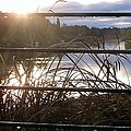 Raindrops To River Sunrise by Susan Garren