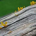 Rainforest Blooms by Mini Arora