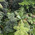 Rainforest Canopy by Susan  Degginger
