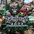 Rainforest by David Nicholls