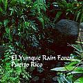 Rainforest by Gary Wonning
