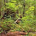 Rainforest Green Everywhere by Adam Jewell