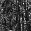 Rainforest by Inge Riis McDonald