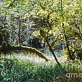 Rainforest Landscape by Bob Phillips