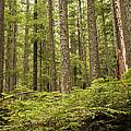 Rainforest by Lee Kirchhevel