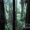 Rainforest Mist by Thomas R Fletcher