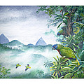 Rainforest Realm - St. Lucia Parrots by Christopher Cox