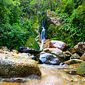 Rainforest Stream New Zealand by Amanda Stadther