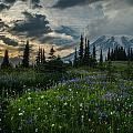 Rainier Abundance Of Flowers by Mike Reid