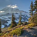 Rainier From Paradise Glacier by Mike Reid
