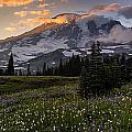 Rainier Meadows Splendor by Mike Reid