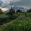 Rainier Meadows Wandering by Mike Reid
