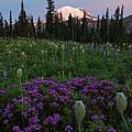Rainier Pastel Dawn by Mike  Dawson