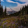 Rainier Tipsoo Wildflowers by Mike Reid