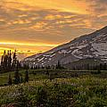 Rainier Wildflowers Meadow Sunset by Mike Reid