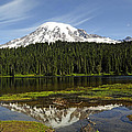 Rainier's Reflection by Tikvah's Hope